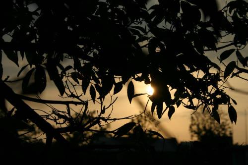 夕方なので逆光ばっかりです。