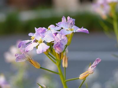 なんか土手に山ほど咲いてた花。名称不明。