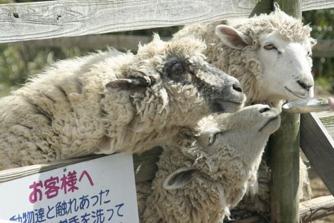 羊。馬とかもいた。